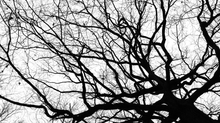 branches_420x747