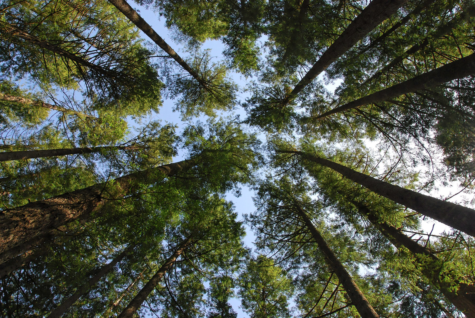 To What Extent Could Planting Trees Help Solve Climate