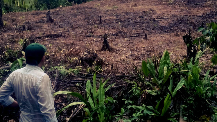 Colombian farmer looks at destroyed crop field.