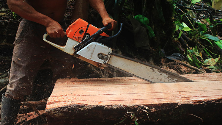 brazil_chainsaw_amazon_tree_stk_747x420