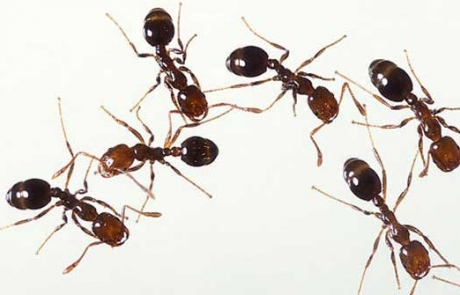 The Ant Trap: An Expert Workshop
