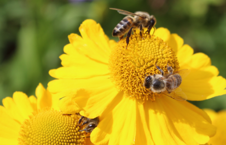 Apply now: Four-year PhD Scholarship on Foundations of Animal Sentience