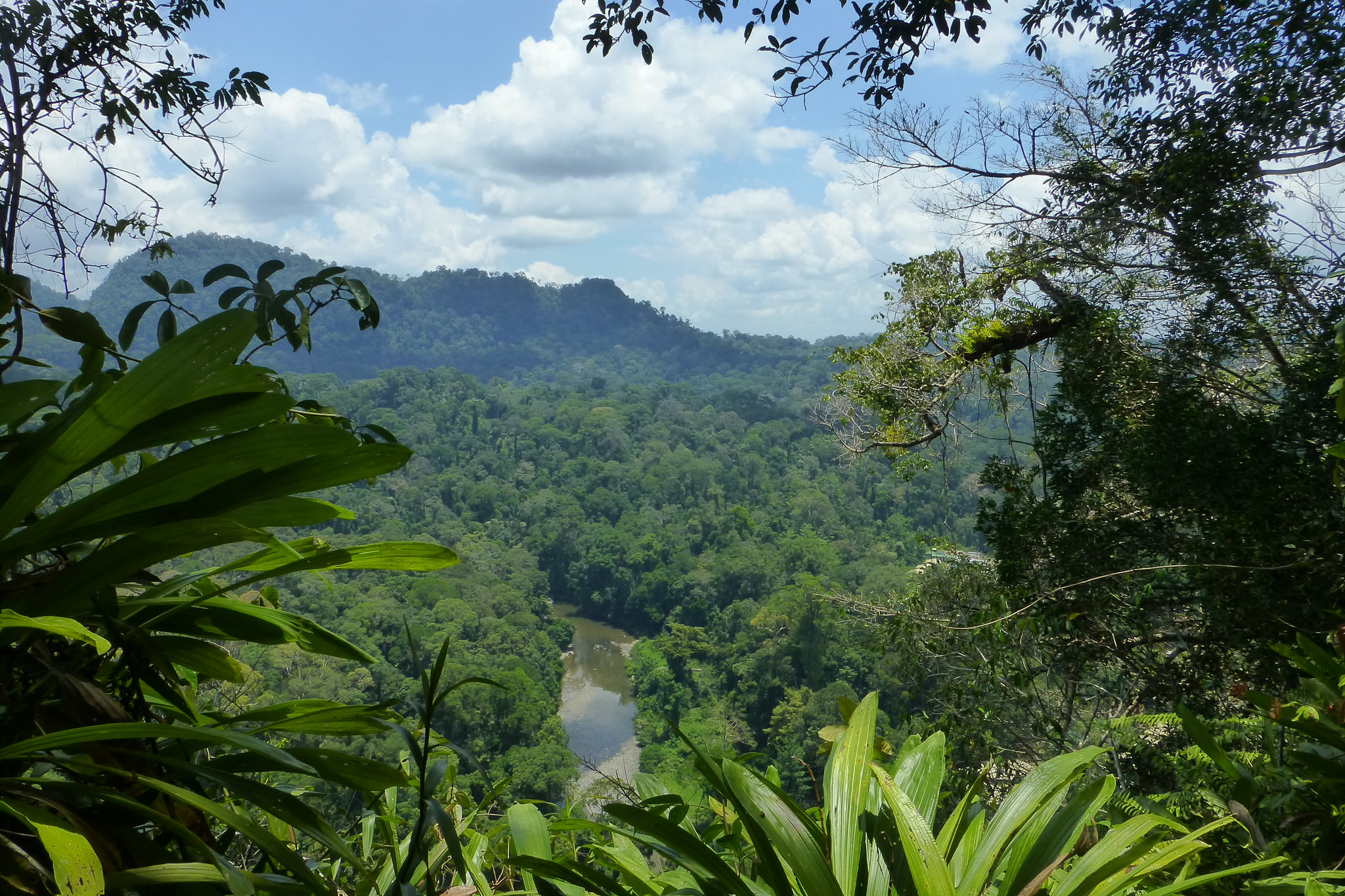 A sunny view over the jungle in Borneo, Indonesia